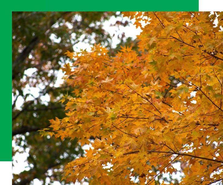 Ballville-township-leaves
